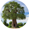 Phytotherapie_aromatherapie